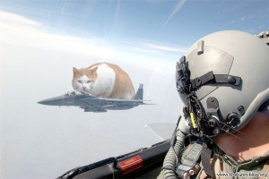 cat-fighter-air-new-decade-war-machine-humor-fun-blog